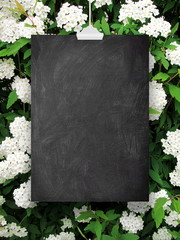 Close-up of one blank blackboard frame hanged by clip against white blooms background