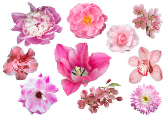 Collection of pink flowers isolated on white background