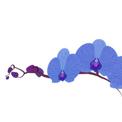 Blue beautiful orchid illustration Branch blue orchid for design on a white background