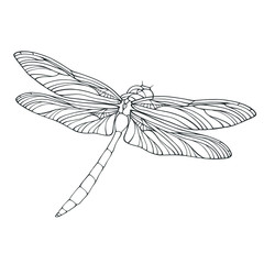 Vector outline dragonfly illustration isolated