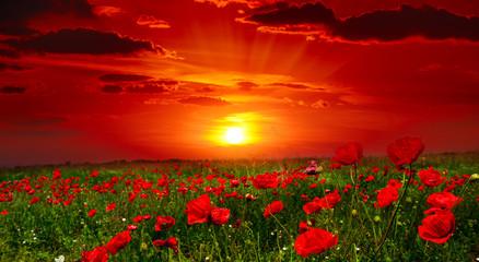 Wall Mural - Bright sunrise in poppy field