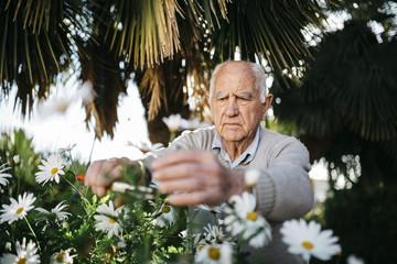 Margerite,Palme,Garten,Gartenarbeit,Hobby,Zerbrechlichkeit,Senior