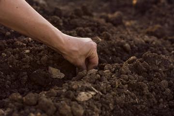 Woman's hand seeding new plant
