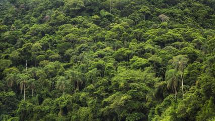 Dense tropical rainforest in Brazil, nature background.