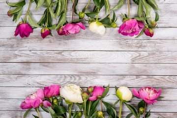 White and pink peonies flowers on white painted wooden planks. Place for text. Square image. Top view.