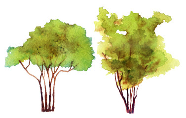 watercolor sketch of a tree on a white background