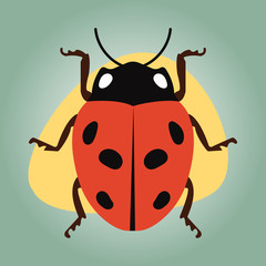 Ladybug colorful icon