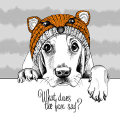Basset Hound dog in a fox muzzle hat. Vector illustration.