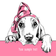 The image Portrait of a dog Basset Hound in the headband. Vector illustration.