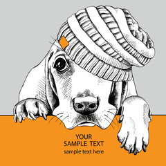 The poster dog Basset Hound portrait in the knitted hat. Vector illustration.