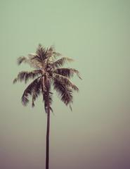 palm tree on blue sky background.
