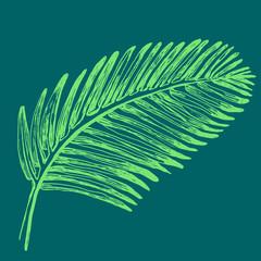 Palm leaves illustration. Tropical jungle plant. Retro vintage style. Green color.