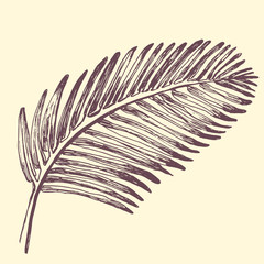 Palm leaves illustration. Tropical jungle plant. Vector eps10. Retro vintage style.