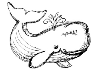 The whale drawing. Hand drawn illustration with whale. Animal in the sea and ocean.