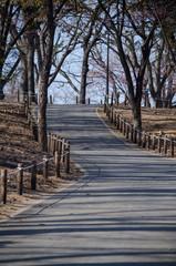 公園の坂道