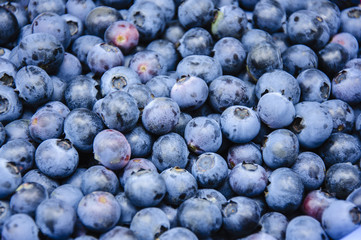 The blueberry fruits and background