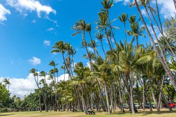 Hawaii Coconut tree