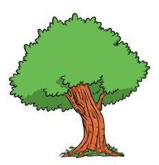Tree oak illustration cartoon image
