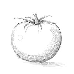 Tomato. Graphics. Illustration. Vector.