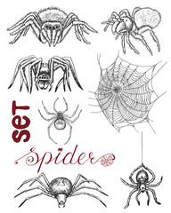 Hand drawn set with spiders and cobweb