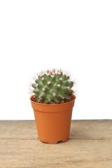 Cactus Mammillaria Nejapensis in orange pot on wooden floor, white background for insert text