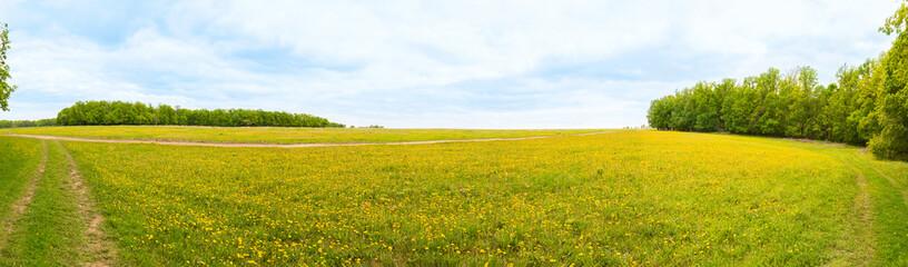 Sunny field of dandelions
