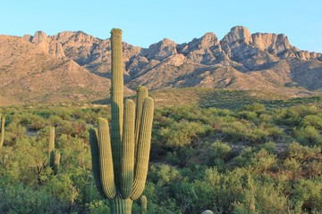 Arizona Desert Mountains and Cactus Landscape