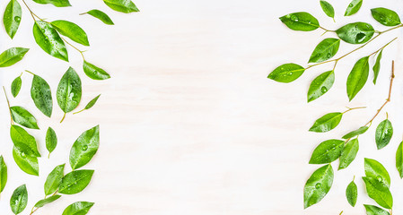 Wall Mural - Border or banner of Green leaves  with dew drops on white wooden background, top view.  Ecology, organic or nature background. Green leaves pattern.