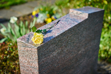 grief at on cemetery / withered yellow rose on gravestone