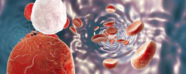 Panorama 360 degree view inside blood vessel, red blood cells and white blood cells, background with red blood cells, medical background, circulatory system, cardiovascular system. 3D illustration