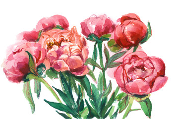 bouquet of red peonies, isolated watercolor painting