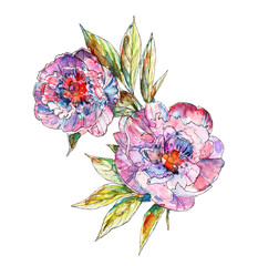 Botanical illustration of peony flower, vector made from my own watercolor painting