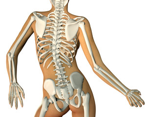 3d render of a back woman body and skeleton showing close up of