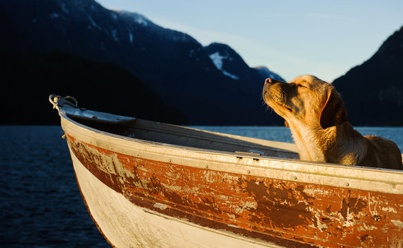 Yellow Labrador Retriever sitting in a red aluminum boat in the mountain lake