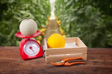 melon in wooden box ,melon on weighing scale, Scissors,  blur  backgorund