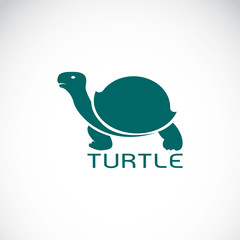 Vector image of an turtle design on white background