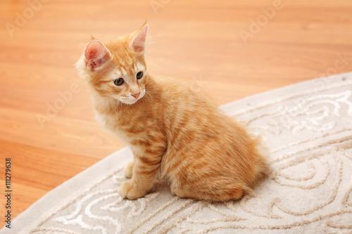 Redhead Pusy Pics
