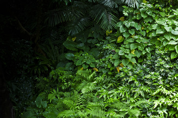 Lush green tropical jungle