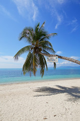 beautiful tropical beach white sand coconut tree with blue sky o