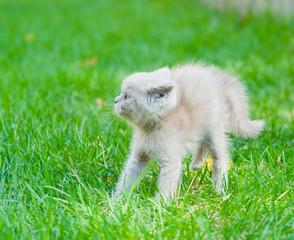 frightened baby kitten on green grass