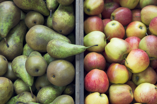 Stack of green pears next to pile of fresh red and green apples on display in outdoor baskets at farmers fruit market