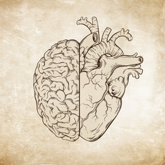 Hand drawn line art human brain and heart. Da Vinci sketches style over grunge aged paper background vector illustration. Logic and emotion priority concept.