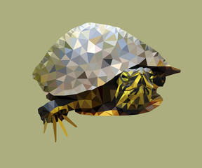 Turtle vector low poly illustration