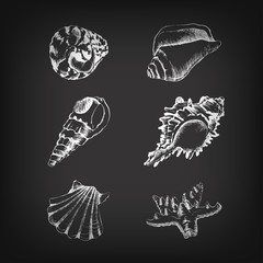 Vector set of hand-drawing with shells