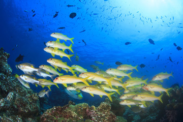 School of fish on underwater ocean coral reef