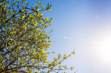 Green tree in summer time on the blue sky background