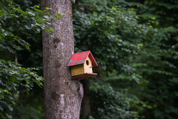 Bird box in the forest
