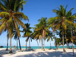 Poster Zanzibar Palm trees on the beach, Zanzibar