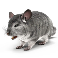 Chinchilla on a white 3D Illustration