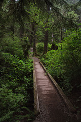 Olympic np forest